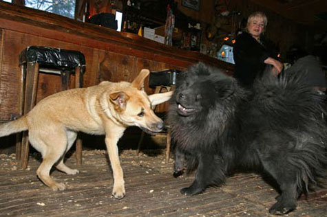 Two Blind Dogs Playing at the Dog Friendly Bar!