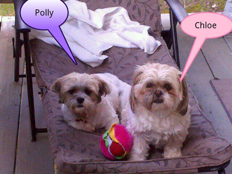 Polly and Chole!