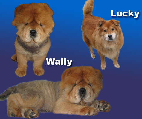 Wally and Lucky!