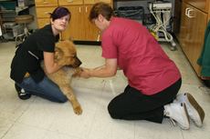 Mr. Chow gets a heartworm test.
